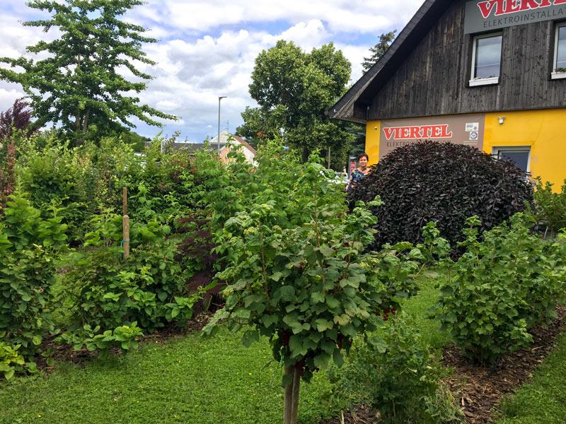 Bienenfreundliches Betriebsgelände Viertel Elektroinstallation